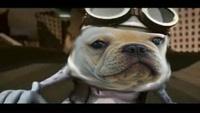 crazy dog_c0068515_18172763.jpg