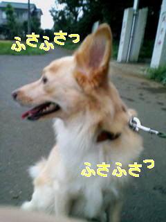 c0076933_20225487.jpg