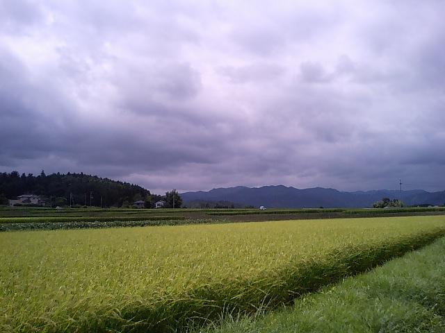 もうすぐ収穫の秋_d0027486_234493.jpg