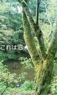 d0081210_16141380.jpg