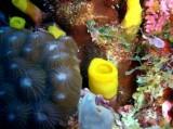 [ダイビング]ヤップカバーンズを彩るものたち&開戦の仕組み_a0043520_0504861.jpg