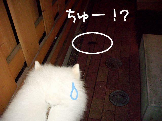 猫の恩返し?_c0062832_12545939.jpg