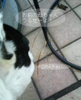 a0052736_11101641.jpg