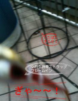 a0052736_11165997.jpg