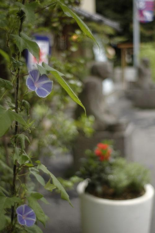 深大寺の花々_f0042194_2241169.jpg