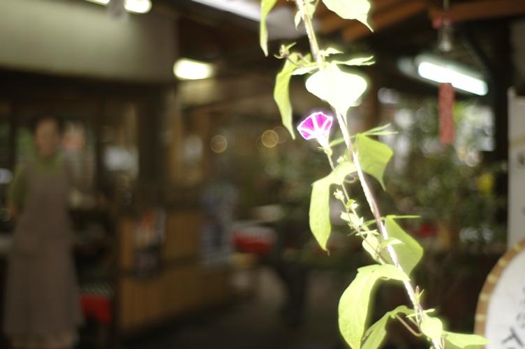深大寺の花々_f0042194_2241314.jpg