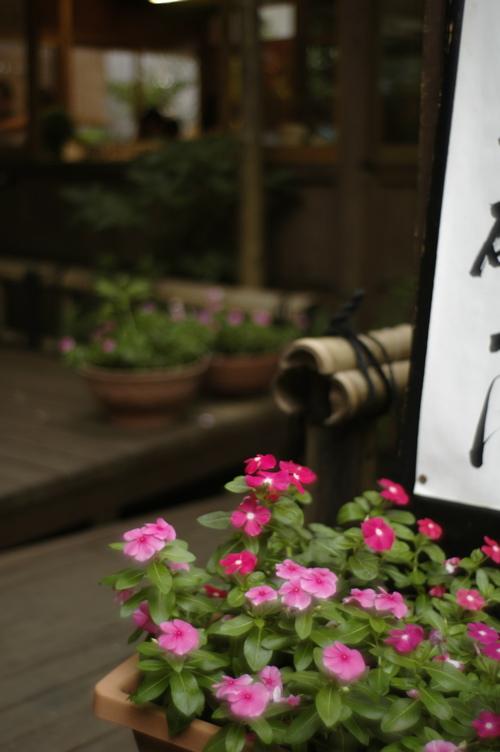 深大寺の花々_f0042194_2242956.jpg