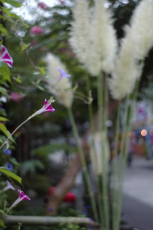 深大寺の花々_f0042194_2259242.jpg
