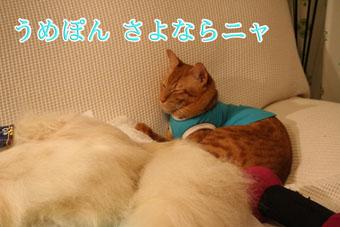 f0101903_13535979.jpg