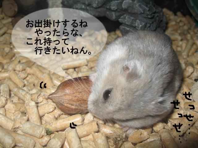 f0097734_1412980.jpg