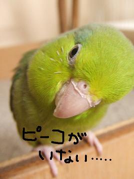 b0082757_0351941.jpg