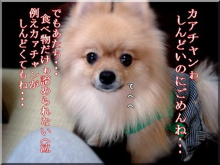 b0078073_0113359.jpg