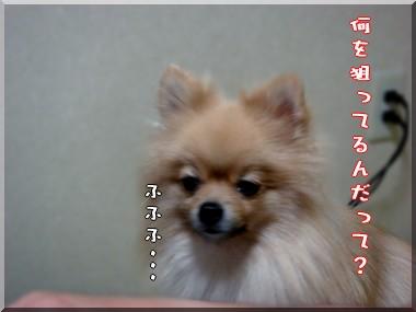 b0078073_061276.jpg