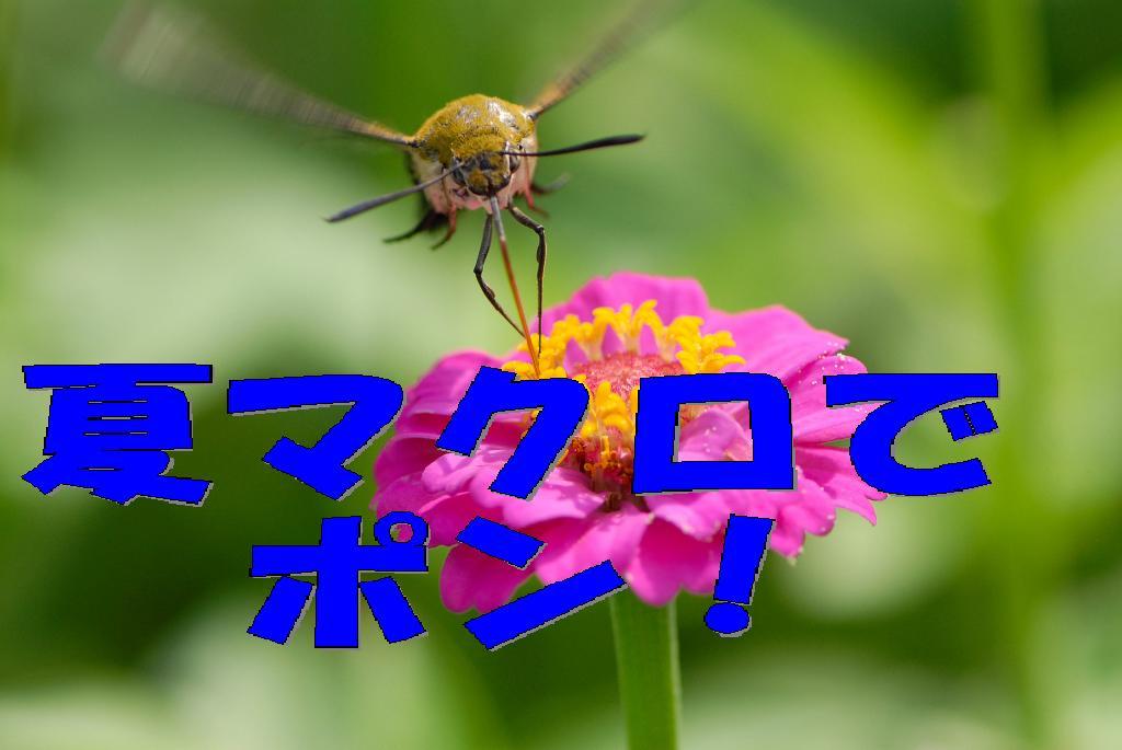 f0032335_22314028.jpg