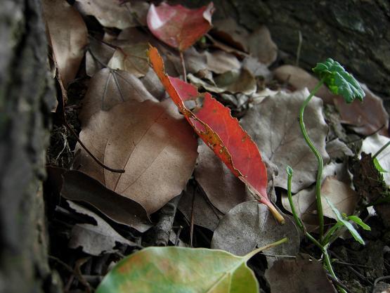 秋からのささやき。_b0089338_059321.jpg