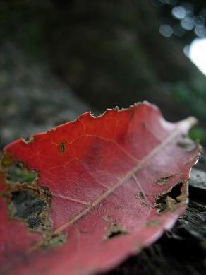 秋からのささやき。_b0089338_142036.jpg