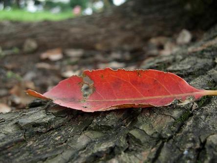 秋からのささやき。_b0089338_145167.jpg
