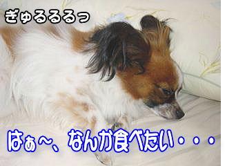 f0011845_17422712.jpg