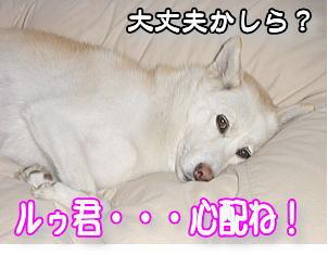 f0011845_17424684.jpg