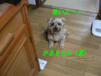 d0013645_16512014.jpg