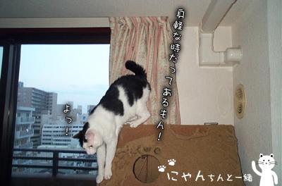 巨猫まで、あと一歩_e0031853_10522238.jpg