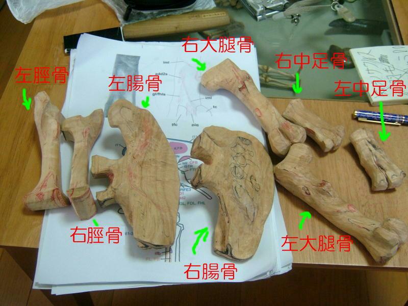 ティランノサウルス 腰_e0064457_12433310.jpg