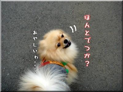 b0078073_0145941.jpg