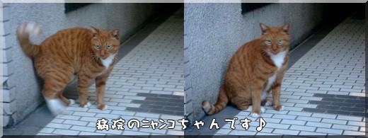 b0078073_045744.jpg