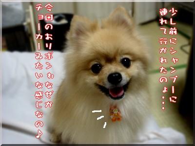 b0078073_06329.jpg