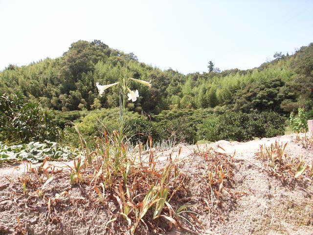 しまなみ海道旅日記4 (8月12日 因島へ)_c0092152_048759.jpg