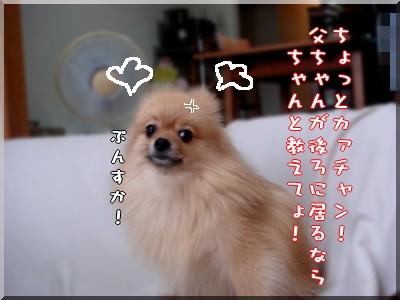 b0078073_2249882.jpg