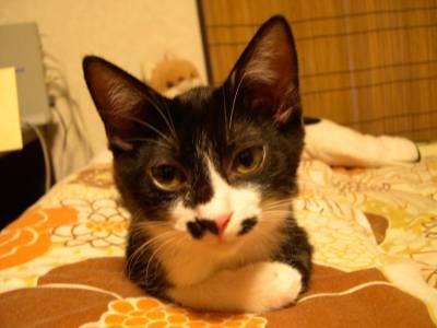 【4cats】 キョウダイ仲良し_a0066779_22204648.jpg