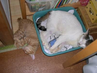 【4cats】 キョウダイ仲良し_a0066779_2324068.jpg