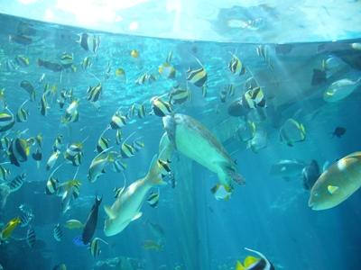 北国の女、南の島に行く その2 ~ミュージアム好きの美ら海水族館レポート_f0079085_1643519.jpg