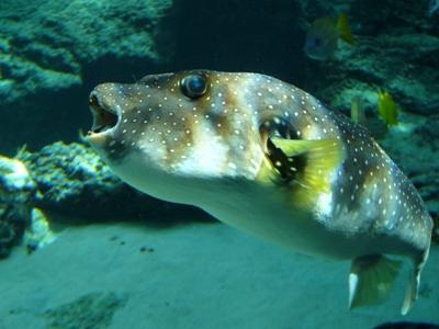 北国の女、南の島に行く その2 ~ミュージアム好きの美ら海水族館レポート_f0079085_1644952.jpg