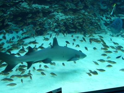 北国の女、南の島に行く その2 ~ミュージアム好きの美ら海水族館レポート_f0079085_165172.jpg