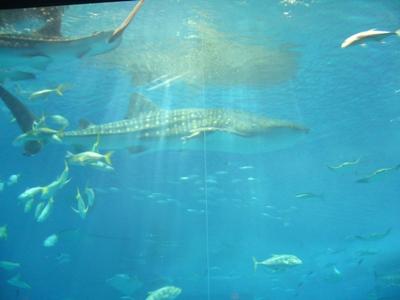 北国の女、南の島に行く その2 ~ミュージアム好きの美ら海水族館レポート_f0079085_1665828.jpg