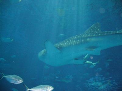 北国の女、南の島に行く その2 ~ミュージアム好きの美ら海水族館レポート_f0079085_1671389.jpg