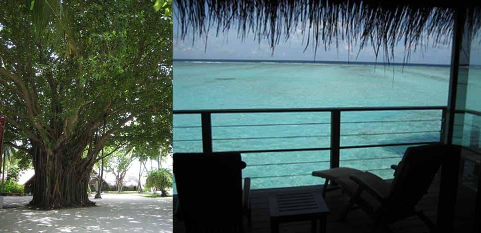 028【Atoll】_b0071712_17461785.jpg