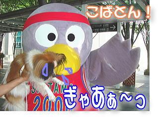 f0011845_2015137.jpg
