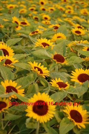 f0065768_12585151.jpg