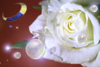 b0066069_2133988.jpg