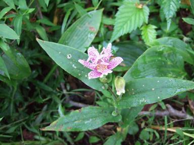 金時山の花 Vol.5_e0024094_18192816.jpg