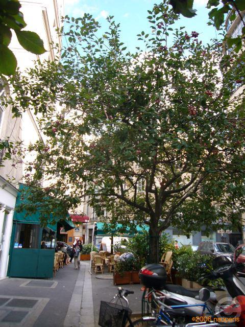 ■街角の姫リンゴ(PARIS)_a0008105_3445690.jpg