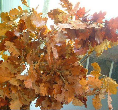 オークリーフ(もうすぐ秋バラの季節です)_f0049672_10451294.jpg