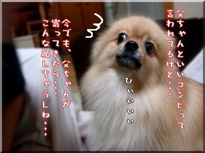 b0078073_19533634.jpg