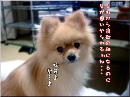 b0078073_19583589.jpg