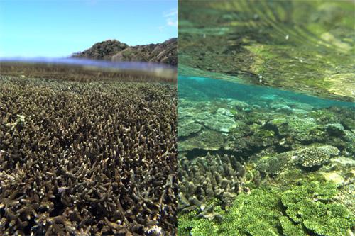 9/4 サンゴ礁モニタリング_a0010095_1511321.jpg