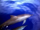ダイブログ・イルカの海で思ったこと_a0043520_1222779.jpg