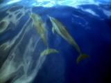ダイブログ・イルカの海で思ったこと_a0043520_1225930.jpg